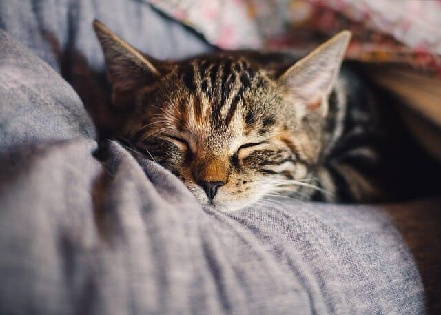 Elämäntapamuutos ja unen merkitys